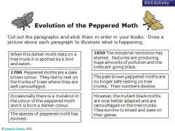 Peppered Moths Natural Selection In Black And White Answer Key